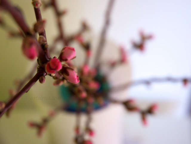 peach tree branches
